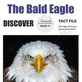 The Bald Eagle- Animal File